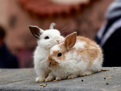 meilleur enclos pour lapin nain