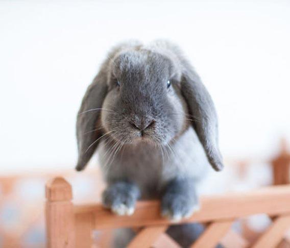 quel prénom pour mon lapin