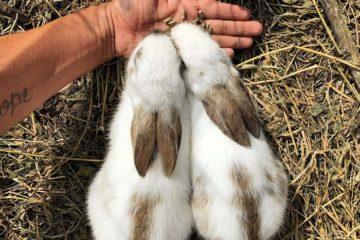 conseils alimentation lapin