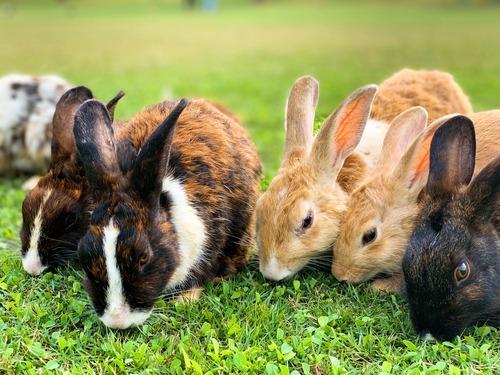 connaitre les lapins