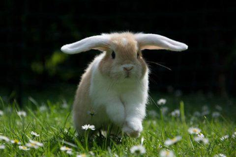 liste prenom pour les lapins