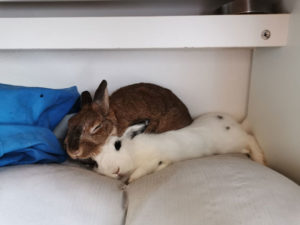 sommeil lapin