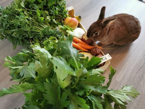 légumes lapin nain
