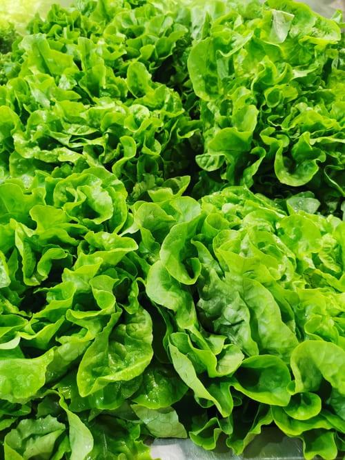 légumes comestibles lapin