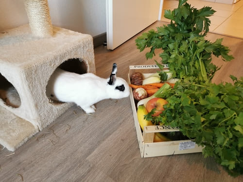 quantité légume lapin