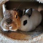 Prix vétérinaire lapin