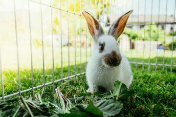 Enclos fait maison lapin