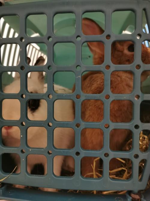 vétérinaire santé lapin