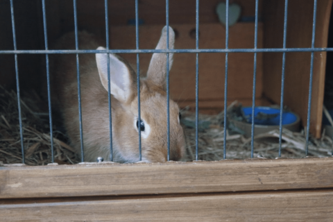 cage lapin nain